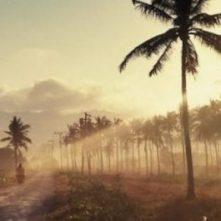 cropped-cropped-cropped-cropped-palm-trees-1081670_192031.jpg