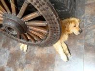 unser Hostel-Wachhund
