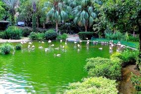 Flamingos im Park