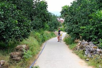 auf dem Weg zwischen Pomelo- und Orangenhainen