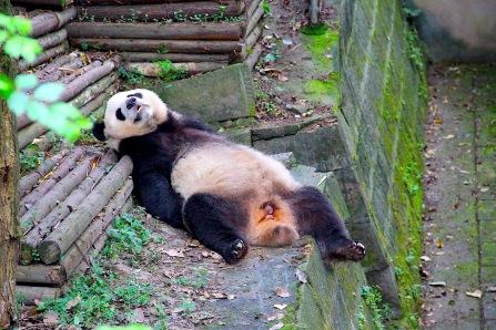 Hangover?