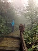 Monkey und Irène