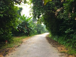Fahrt durch den Nationalpark