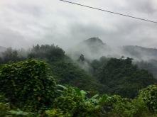 Nebelbehangene Wälder