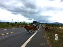 tierische Verkehrshindernisse