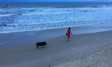 Spaziergang mit Schwein