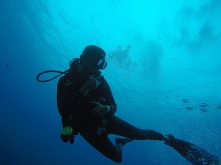 Tresher-Shark-Dive