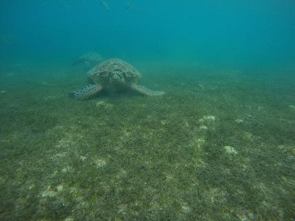 Schnorcheln mit Meeresschildkröten