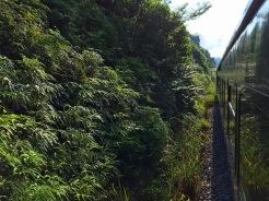 Mit dem Zug durch den Dschungel