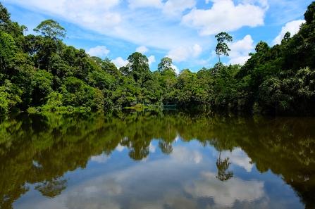 Rainforest Discovery Center