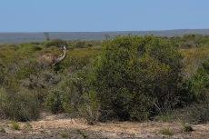Emus! :-)
