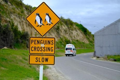 Caution- Penguins Crossing :-)