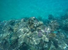 Schnorcheln in der Lagune