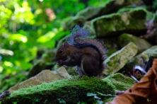 Eichhörnchen mitten im Dschungel