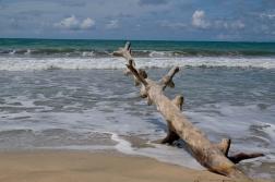 Karibikküste Cahuita Nationalpark