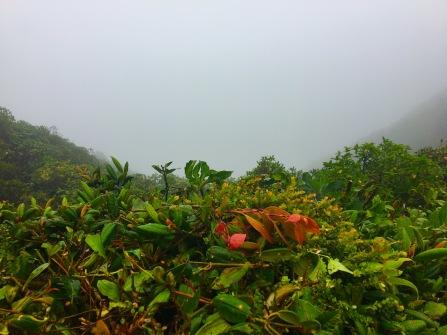 Sicht auf den Pazifik....