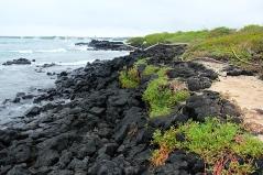 Buchten rund um Puerto Ayora mit dem typisch dunklen Vulkangestein