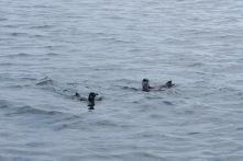 Noch mehr Pinguine...