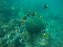 Unterwasserwelt in der Punta Vicente Roca