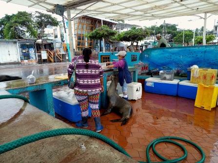 gieriger Seehund zwischen den Marktfrauen