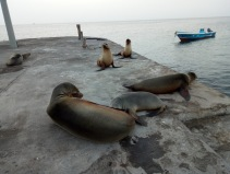 Seehunde am Pier